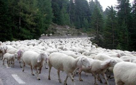 Το πρόβατο που ξεμάντρισε και ο Γκουσκούνης (part 1)